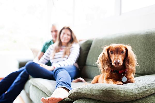 pet friendly home designs